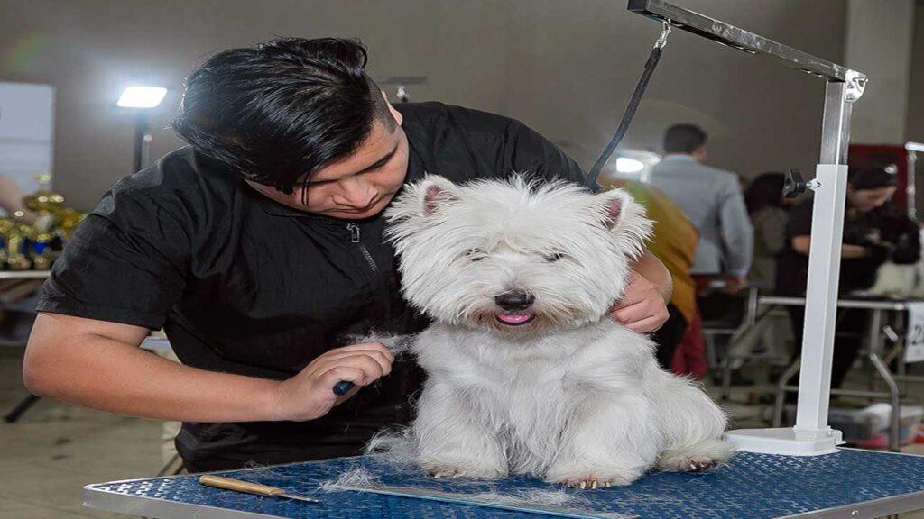Corte de pelo para mascotas