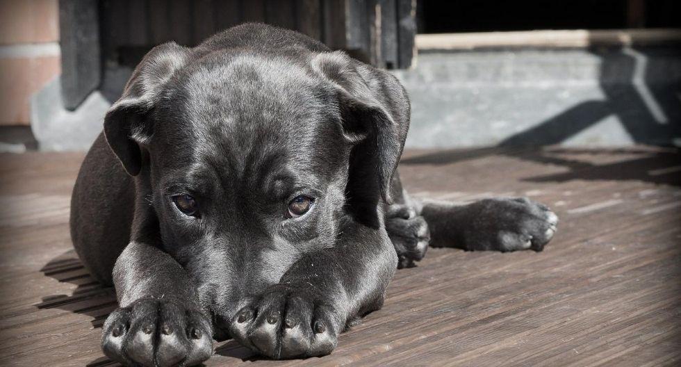¿Es necesario ponerle antipulgas a mi mascota si no sale a la calle?