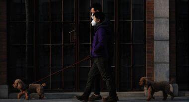 Cuidados básicos para tu mascota en tiempos de pandemia