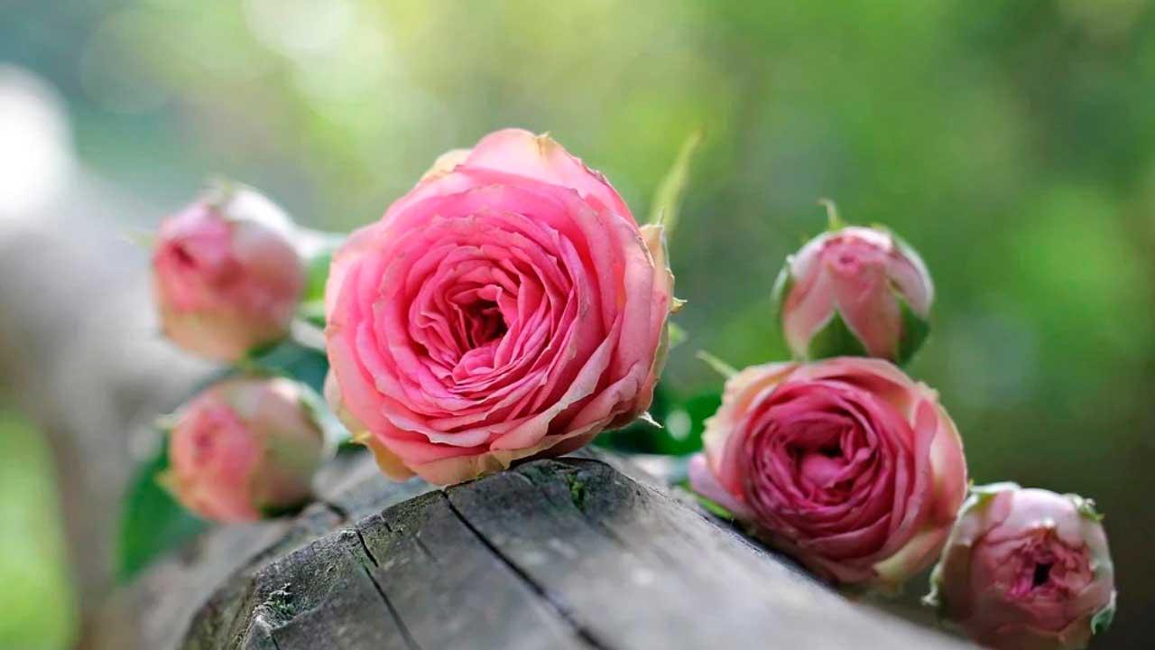 soñar con flores