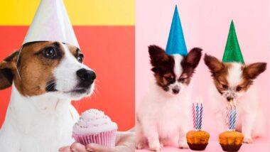 Cupcake de carne para perros