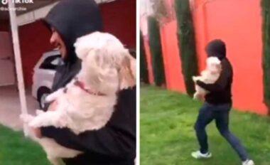 intentan robar a un perro