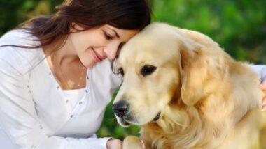 Los perros son muy fieles y cariñosos.