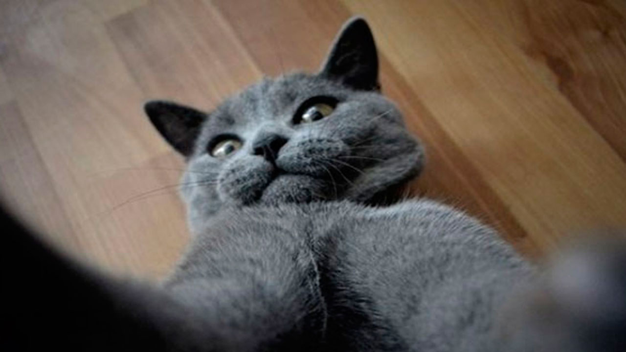 Gata se toma selfies