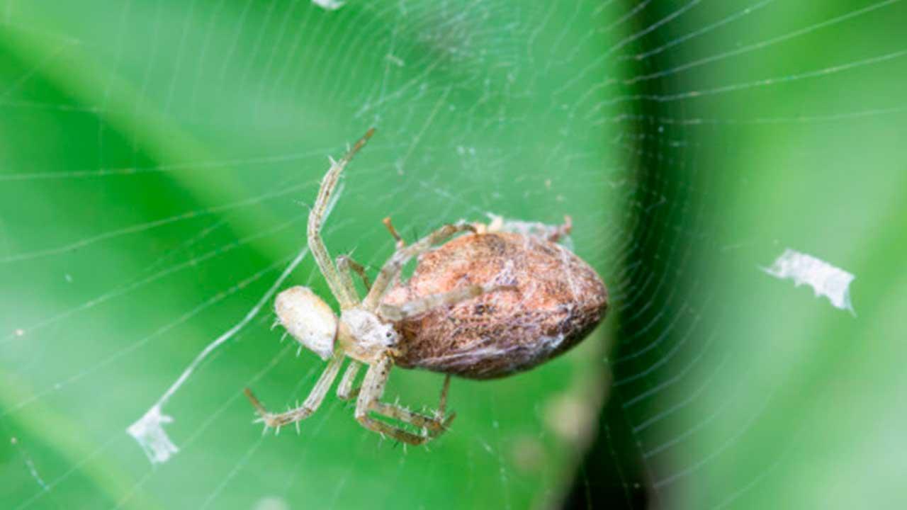 Significado de soñar con arañas