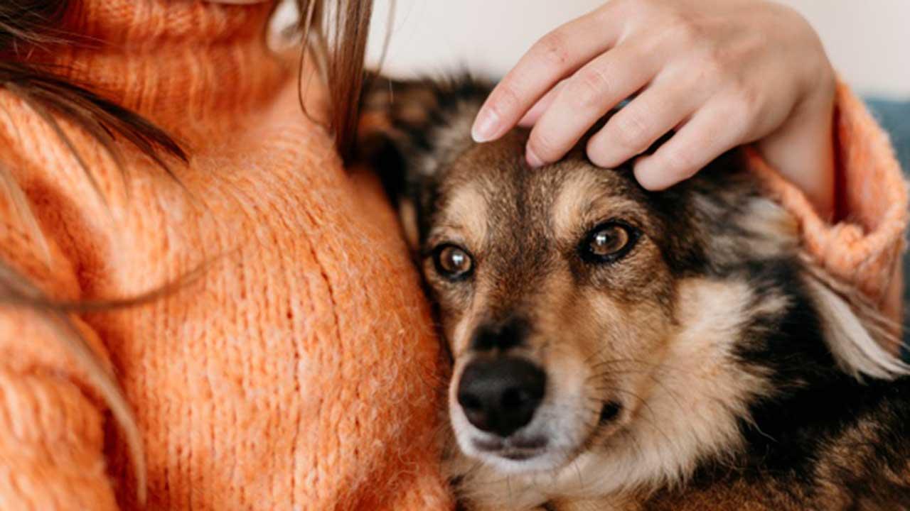 Mascotas en celo