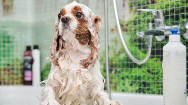 El baño de tu mascota