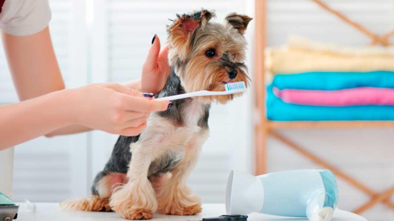 Salud bucal de los perros