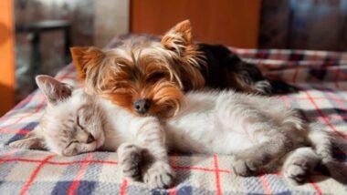 las mascotas también sueñan