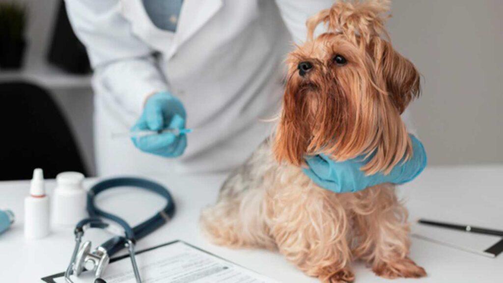 diabetes en las mascotas