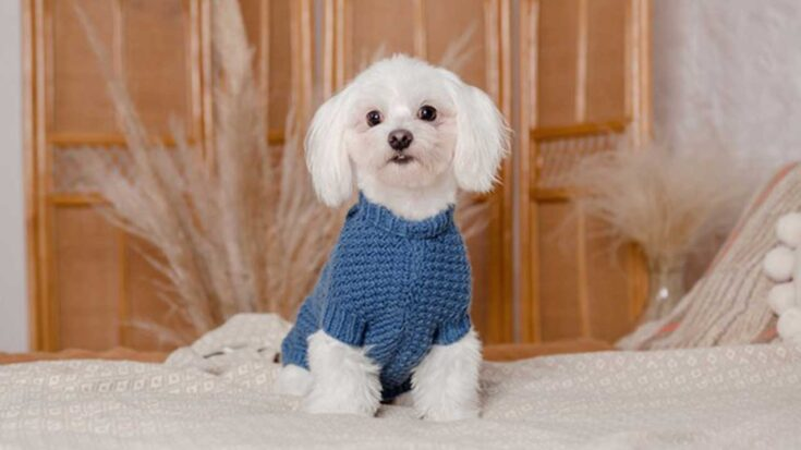 cuidados de tu mascota en invierno