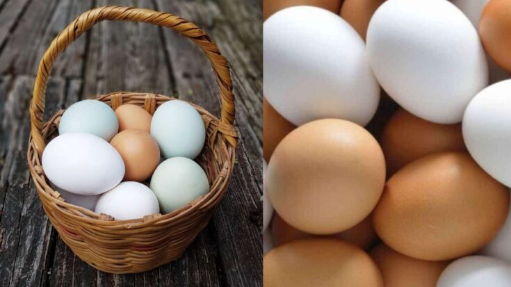 campaña por el día mundial del huevo